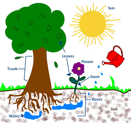 grow more trees essay for kids Benefits of planting trees  children have been shown to retain more of the information taught in schools if they spend some of their time outdoors in green spaces.