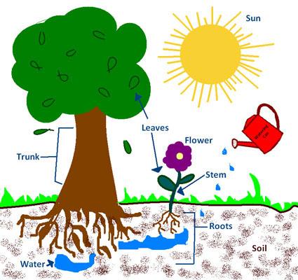 Agronomy For Me Grades K 4 Agronomy 4 Me